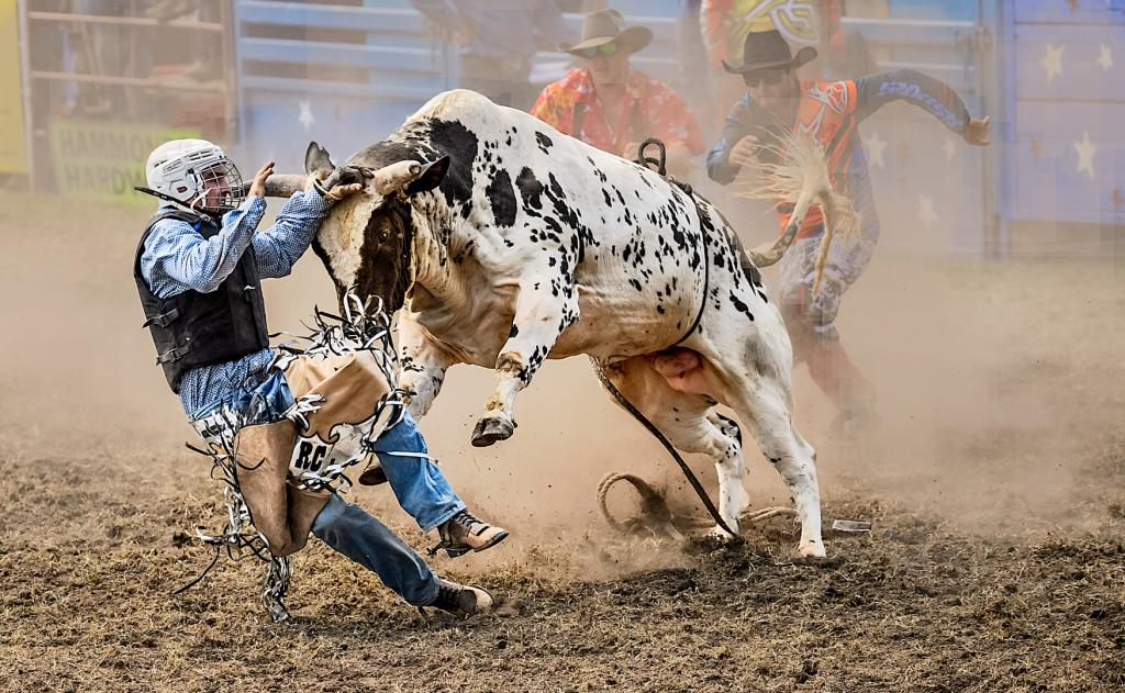 The Bull Usually Wins by Peter Calder - SSPS