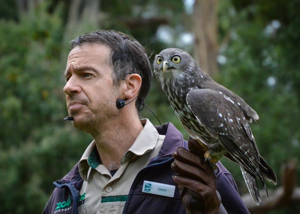 Bird Handler with Barking Owl by Lee Lynch