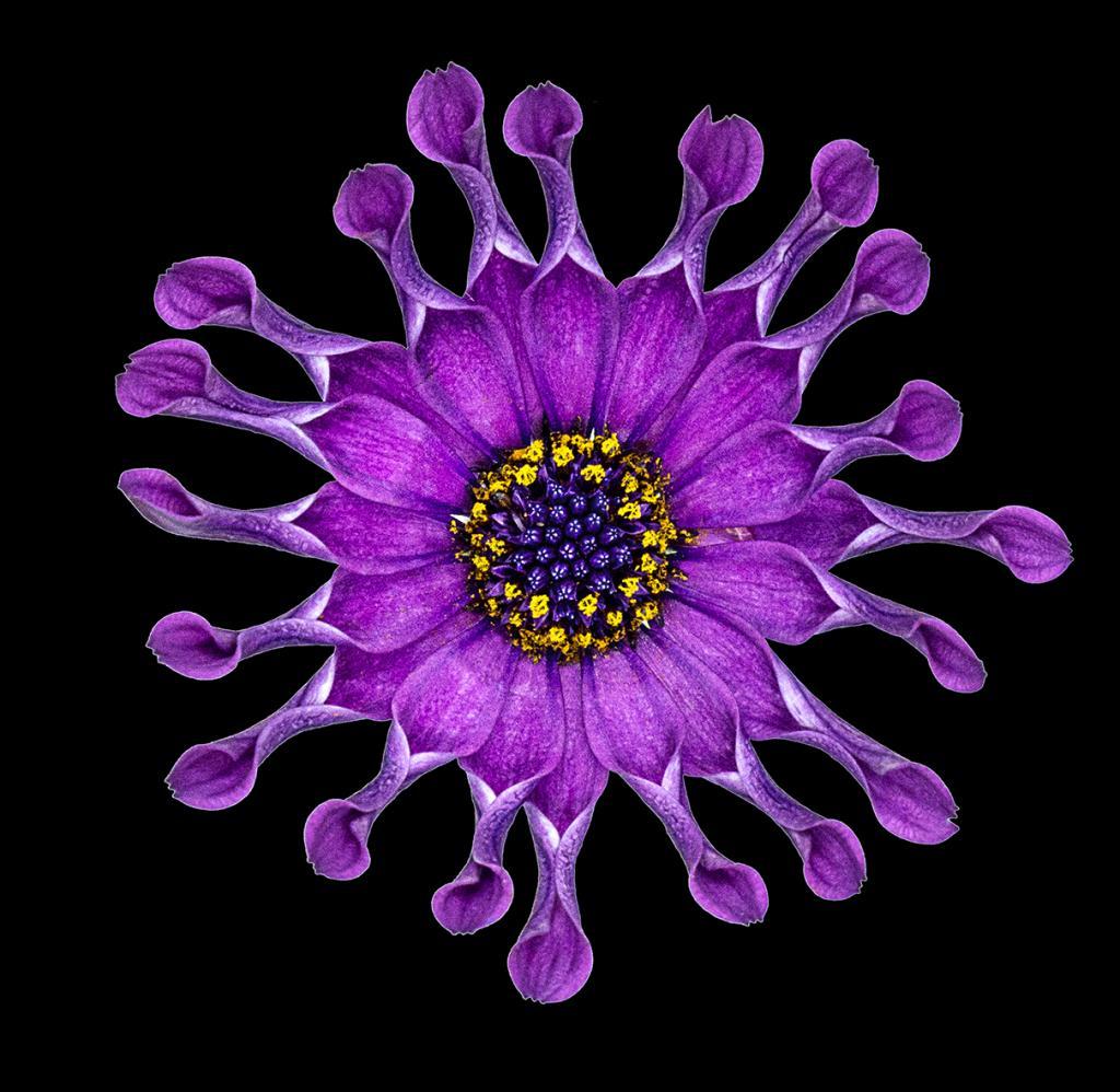 Purple Flower by Margaret Edwards