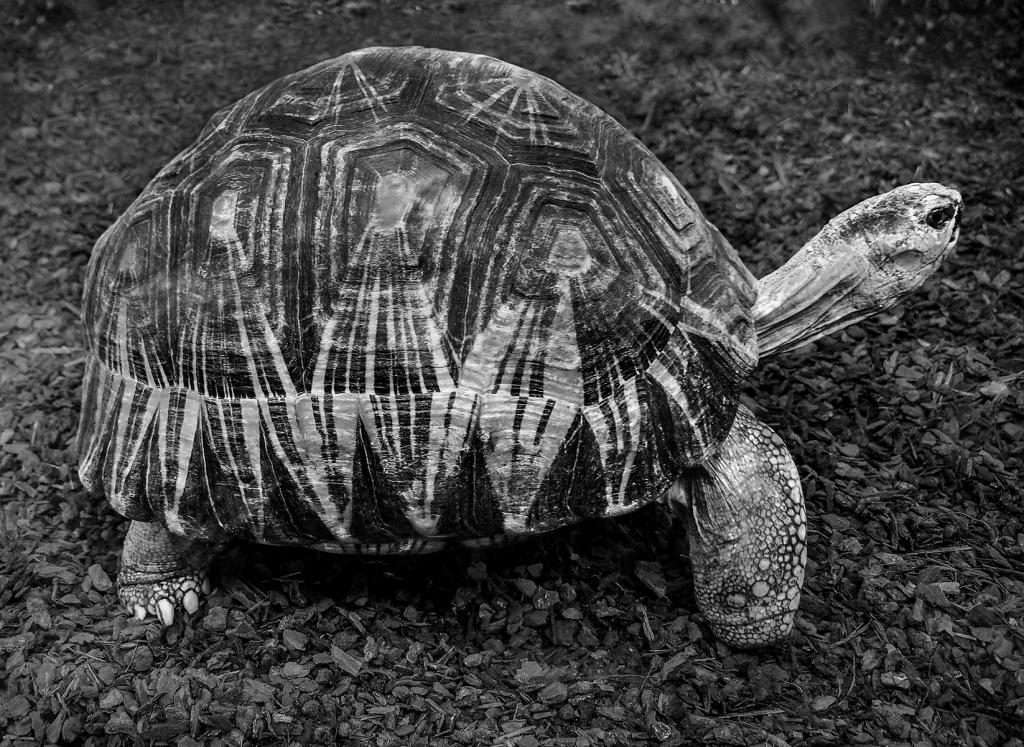 Tortoise shell by Glenda Urquhart