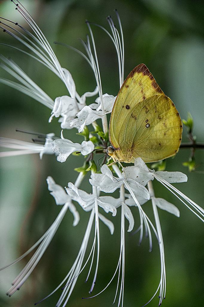 Butterfly Bliss by Wendy Chapman