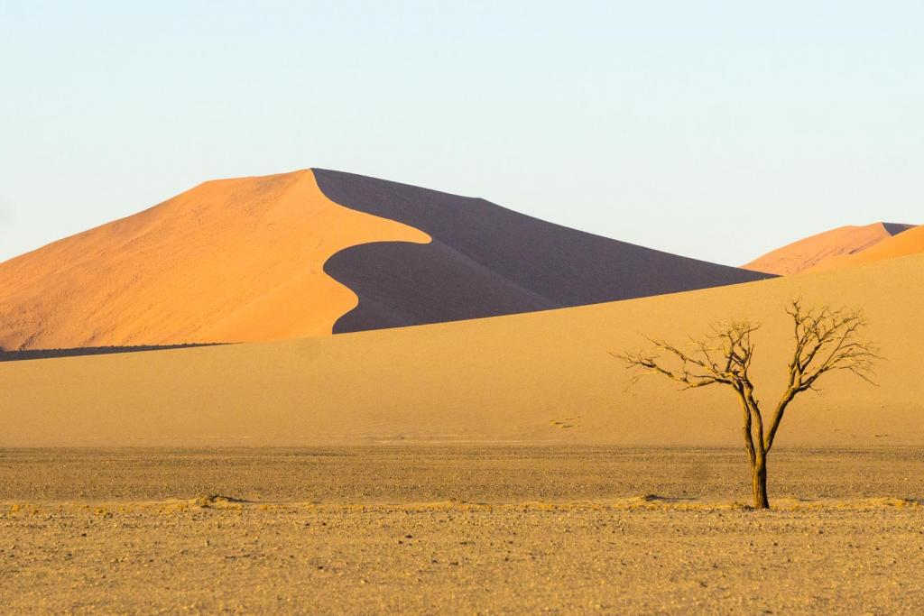Dunes at Sunset by Ngaire Denne