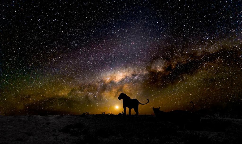 Kgalagadi Milky Way by Peter Calder