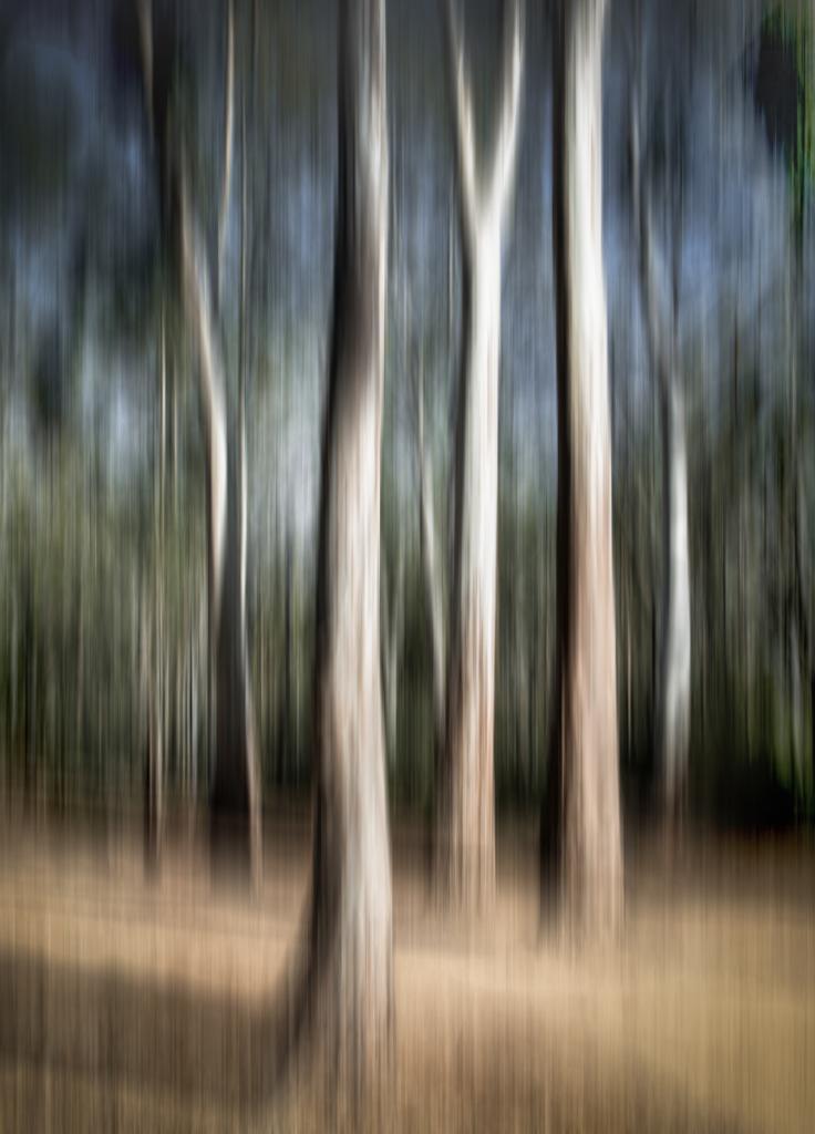 Edward River Gums by Brian Seddon