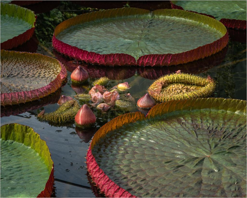 Lily Pad Life by Alan Stevens
