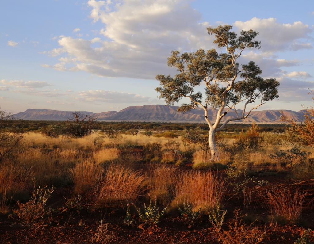 A Pilbara Landscape by Helen Ansems