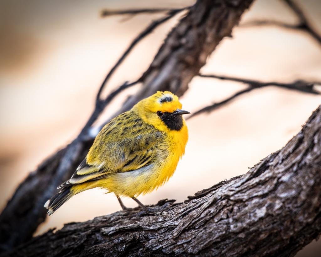 Gibberbird by Graeme Addie