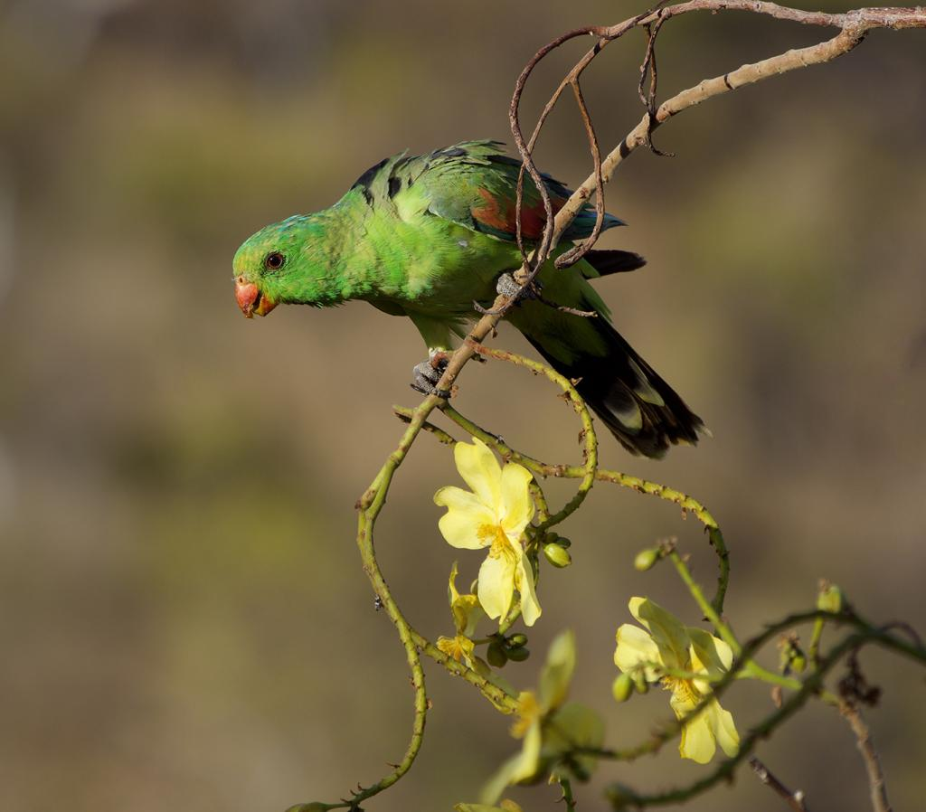 Green and Gold by Diane Peters