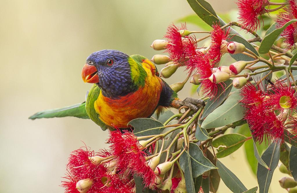 Mucho Flora, Mucho Fauna by Jeffry Farman