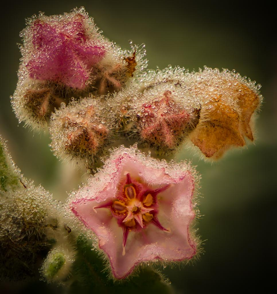 Delicate by Michael Eggleton - SSPS