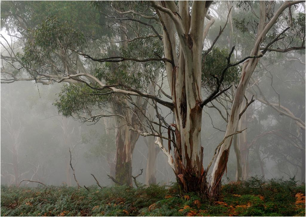 Misty Gums by Bob Clothier - SSPS
