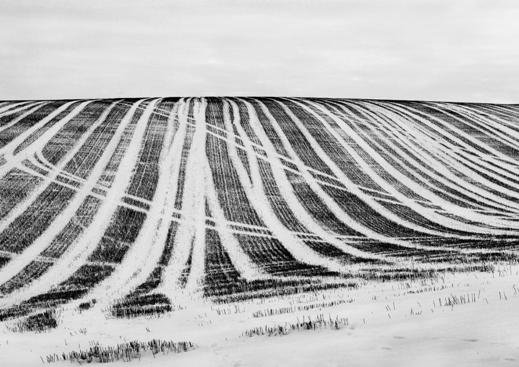 Winter Lines by Michael Krier - CCC